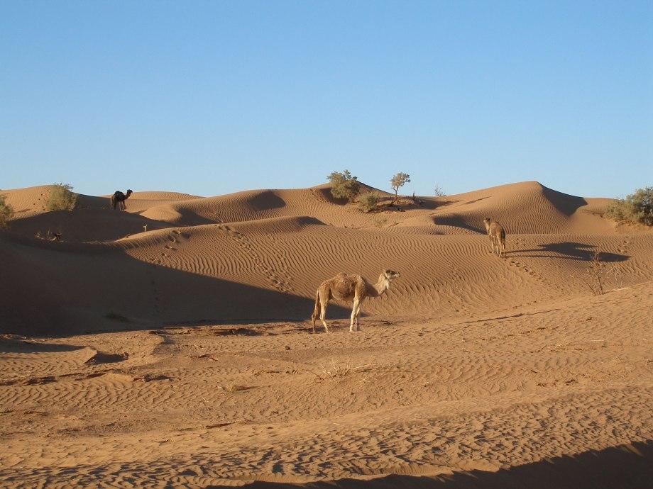 Quelques jours pour découvrir le Désert au départ de Marrakech. - aazab Aventure trek et randonnée au Maroc